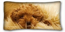 Custom-Pillow-Case-Animals-dog-muzzle-fluffy-look-2036-One-Side-0