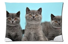Grey-kittens-Style-Pillowcase-Cover-20x30-one-side-Cotton-Pillow-Case-0